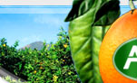 You can find here fresh information about the prices of food, fruit and vegetables which are in all regions of the United States of America.